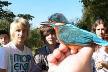 Z Podzimního festivalu ptactva u Třemešských rybníků