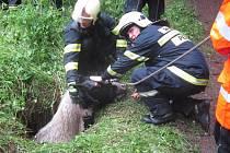 Záchrana koně ve Vernířovicích.