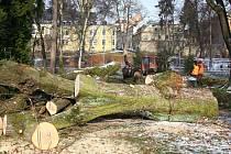 Kácení stromů ve Smetanových sadech v Šumperku.