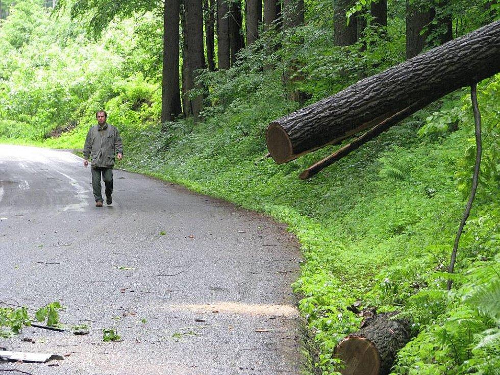 Strom, který zabil ženu a těžce zranil muže