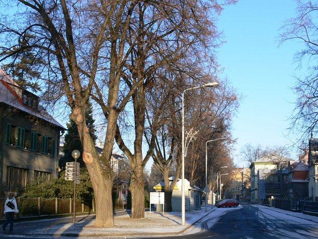 Alej starých lip v ulici 17. listopadu v Šumperku.