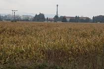 Pozemek v průmyslové zóně Sadová II, který město prodává výrobci tyčinek.