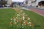 Květinová výzdoba na veřejných prostranstvích Jeseníku.