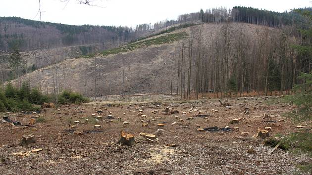 Následky kůrovcové kalamity - pohled od speleoterapie u Zlatých Hor přes pramennou oblast Zlatého potoka na protější kopce.