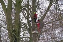 Ve Wolkerových sadech odborná firma pokácel sedm desítek přestárlých a neperspektivních stromů, další pak ošetřila.