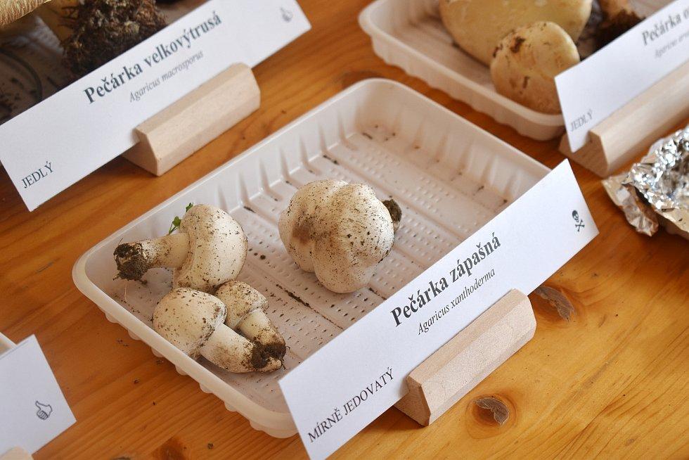 Výstava hub ve Vlastivědném muzeu Šumperk.