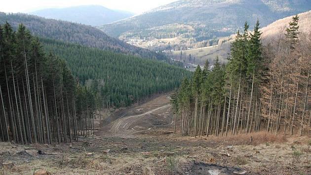 Medvědí hora u Koutů nad Desnou, kde roste nový areál se sjezdovkami