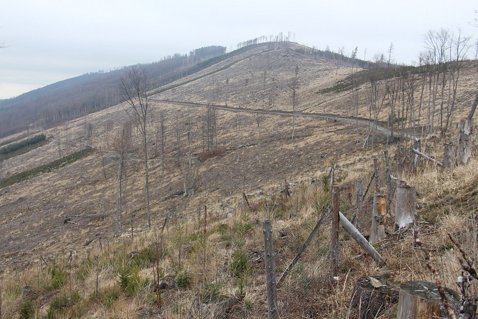 Lesy v lokalitě Větrná u Zlatých Hor