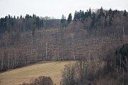 Následky kůrovcové kalamity - pohled z Jeseníku směr Křížový vrch - detail.