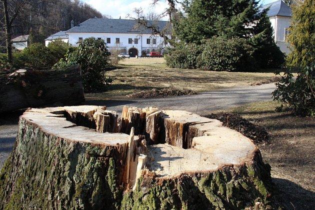 Správa zámku ve Velkých Losinách nechala pokácet čtyřicítku stromů v havarijním stavu v zámeckém parku. Některé z nich ohrožovaly motoristy na přilehlé silnici první třídy.