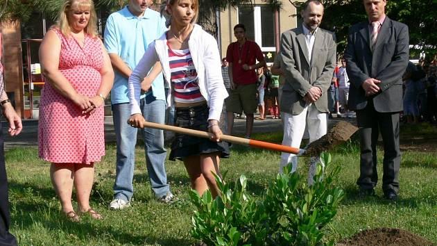 Symbol Pensylvánie, horský vavřín, bude zdobit prostranství před školou na sídlišti Severovýchod v Zábřehu.