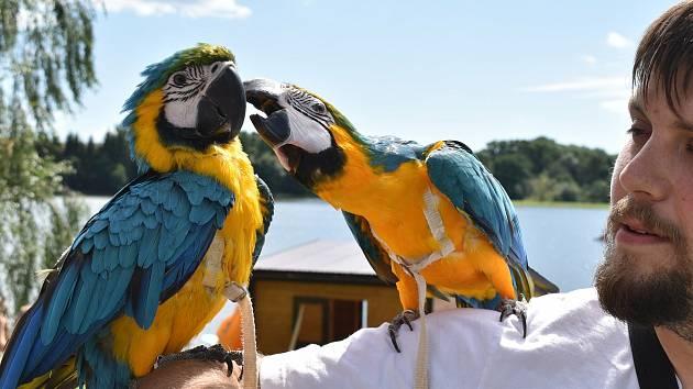Papouščí den na Krásném u Šumperka. 7. srpna 2021