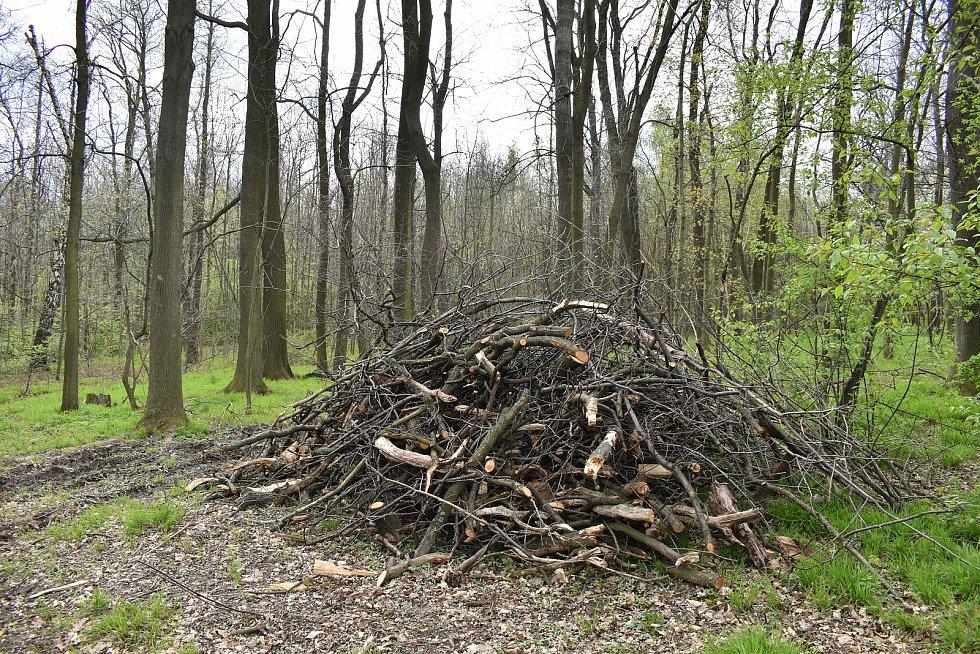 Místo v remízku u Krnova, kde stával mohutný dub. Z majestátního stromu zbyly jen dvě hromady drobných větví.