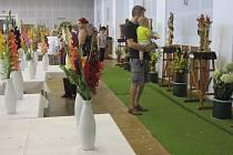 57. ročník výstavy mečíků v Rapotíně