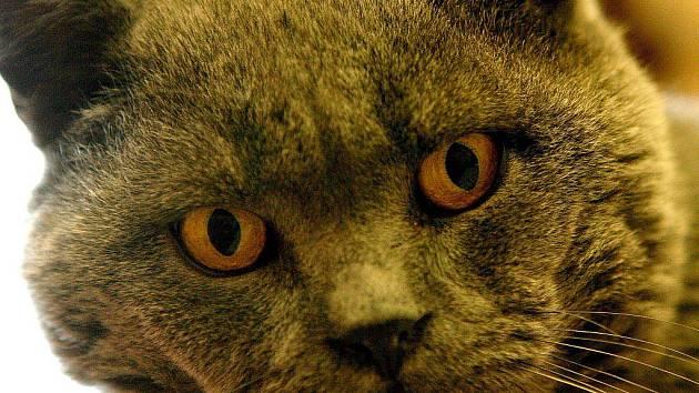 Kočky potulující se v ulicích dráždí Jaroměřické. Stěžují si na radnici