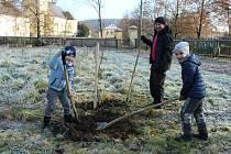 Výsadba stromů ve farní zahradě v Moravičanech