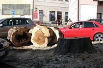 Torzo starého jírovce v centru Šumperku.