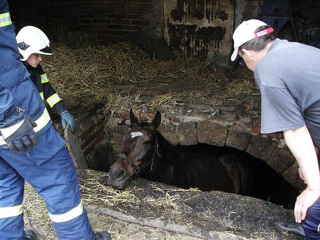 Hasiči zachraňovali v Hynčině u Zábřehu koně