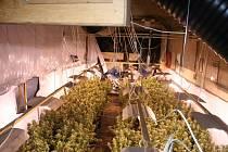 Gang pěstoval ve Velkých Losinách marihuanu.