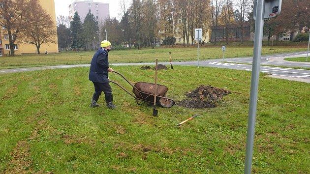 Výsadba stromů vZábřehu