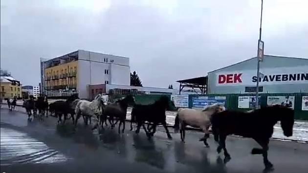Stádo uprchlých koní na Zábřežské ulici v Šumperku