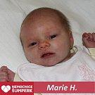 Marie H. Nový Malín