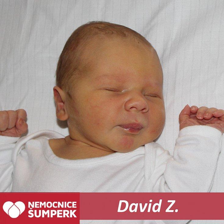 David Z., Postřelmov