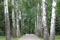 Kompletní obnovou projde už letos na podzim březová alej v parku u kostela svaté Barbory v Zábřehu. Přestárlé stromy půjdou k zemi, nahradí je nové sazenice lip.