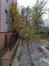 Do oken jednoho z panelových domů na Bludovské ulici v Šumperku se v neděli v 8 hodin ráno převrátil tento vzrostlý strom.
