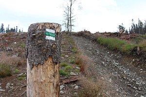 Těžba kůrovcového dřeva komplikuje výlety turistům