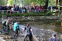 Pivovarské rybníky vydaly svá tajemství