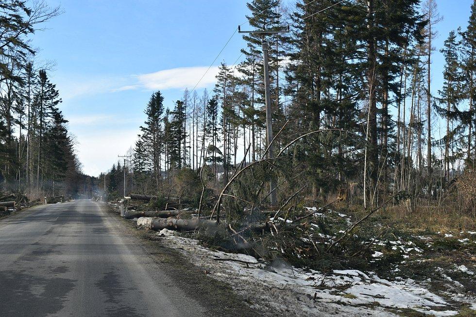 Škody po vichřici u silnice na Dolní Údolí u Zlatých Hor v pátek 22. ledna 2021.