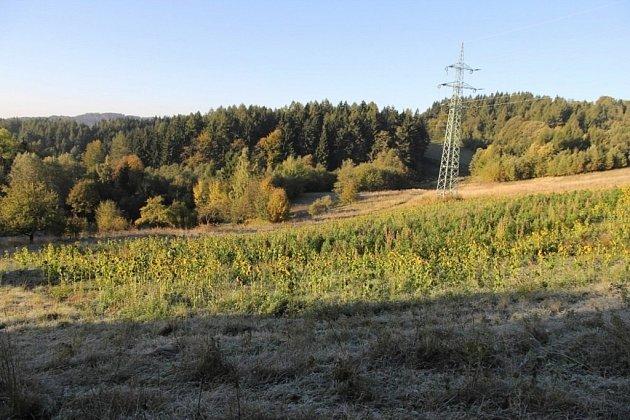 Konopné pole maskované slunečnicemi objevili policisté na začátku října u obce Crhov nedaleko Štítů. Při likvidaci úrody napočítali téměř tisíc pět set rostlin marihuany.