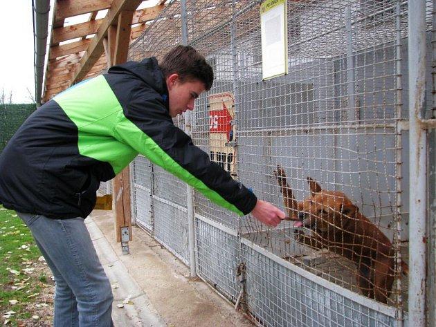 Sto osmdesát kilogramů granulí a pamlsků, ale chovatelských potřeb darovali lidé do sbírky Psí tlapka v Šumperku. Organizátoři její výtěžek rozvezli do psích útulků v Zábřehu (na snímku) a v Olomouci.