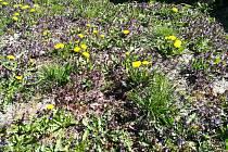 Klid, ticho a vůně květin a stromů. Takové je jaro na vesnici.