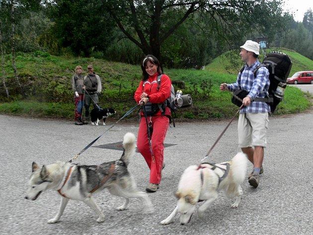 Závodníci. Mezi psy čtyř desítek ras převažovala v závodě severská plemena.