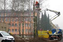 Břízy na sídlišti Sevrovýchod v Zábřehu jsou už přestárlé a padají z nich větve. Na ulici mezi kotelnou a základní školou je už nahradilo nové stromořadí z jiných listnatých stromů.
