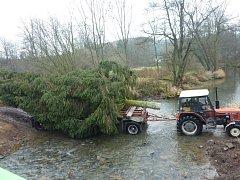 Cesta vánočních stromu z Vlčic na náměstí do Loštic.