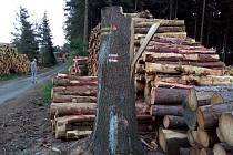 Těžba kůrovcového dřeva komplikuje výlety turistům.