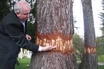 Starosta Loštic Ctirad Lolek (na snímku) označuje vandalův čin za zločin proti přírodě.