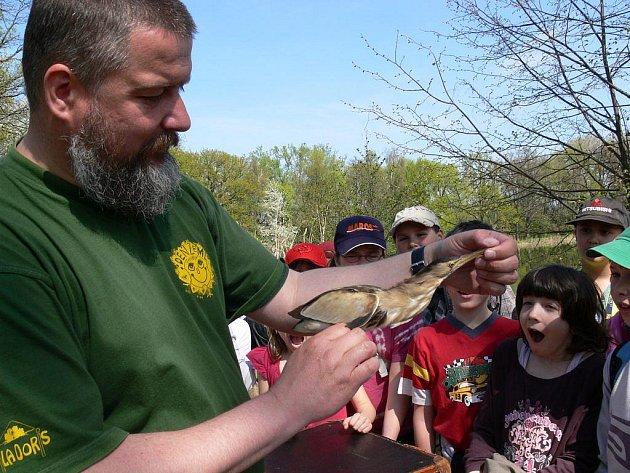 Ornitolog Petr Šaj ze šumperského domu dětí Vily Doris předvádí na akci Vítání ptačího zpěvu vzácného bukáčka malého, což je malý druh volavky