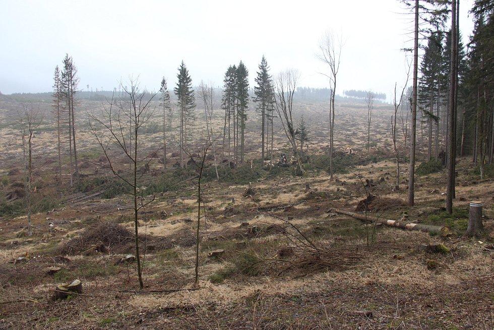 Velká paseka mezi Rejvízem a Dolním Údolím.