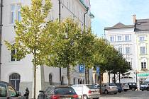 Dvacet let staré lípy u šumperské radnice vykácí, stromy způsobují problémy a trpí.