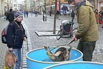 Na pěší zóně v Šumperku nabízeli rybáři šupináče z Třeboně.