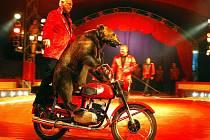 Snímek z vystoupení medvěda (to je ten za řídítky) v cirkusu Berousek
