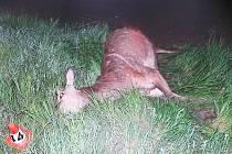 Takhle skončila nehoda Fordu Focus a jelena nedaleko Mohelnice