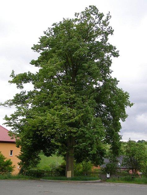 Strom republiky zasadili 1. května 1919 v tehdy ještě samostatné obci Skalička, dnešní místní části Zábřehu. Dnes zdobí prostranství před základní a mateřskou školou v ulici Rudolfa Pavlů.
