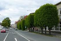 Alej habrů v ulici M. R. Štefánika v Šumperku půjde k zemi.