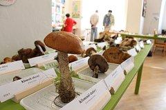 Výstava hub v šumperském muzeu.