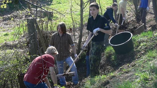 Z hlubokého příkopu vedle hráze rybníka Oborník gymnazisté vyhrabali a vynosili také metráky starého listí.